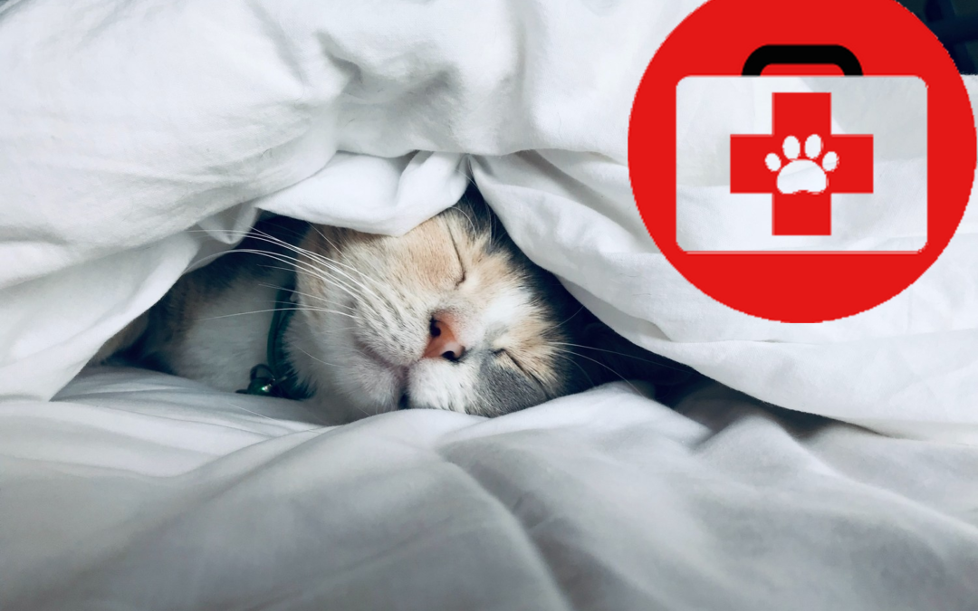 Consultation de prévention & bilan santé chat-chien