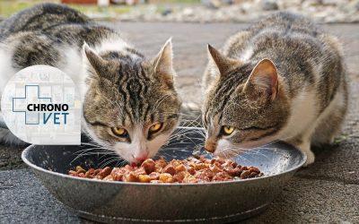 Confinement: Ne Prenez pas de risque,  achetez la nourriture de vos animaux en ligne